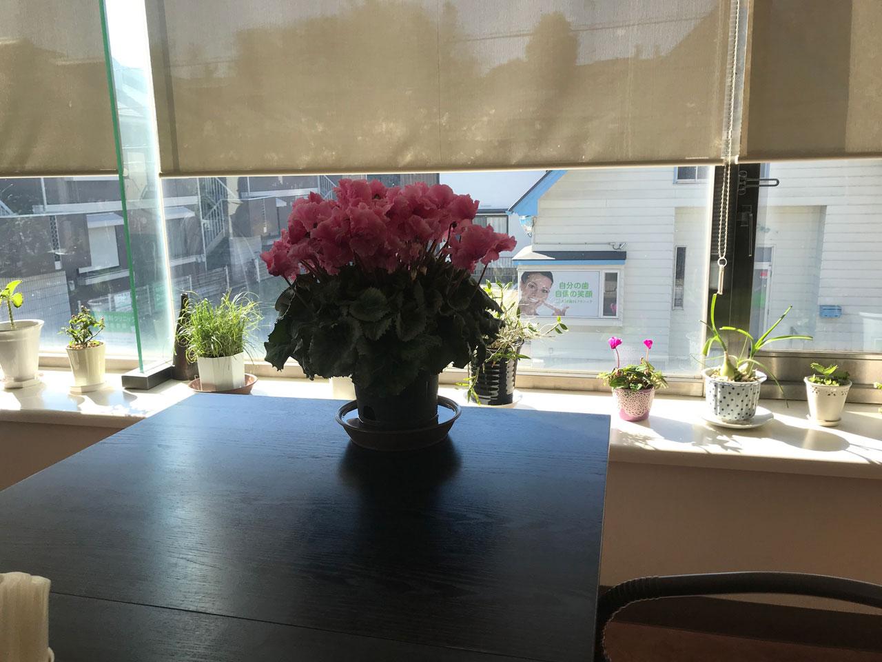 観葉植物のある空間